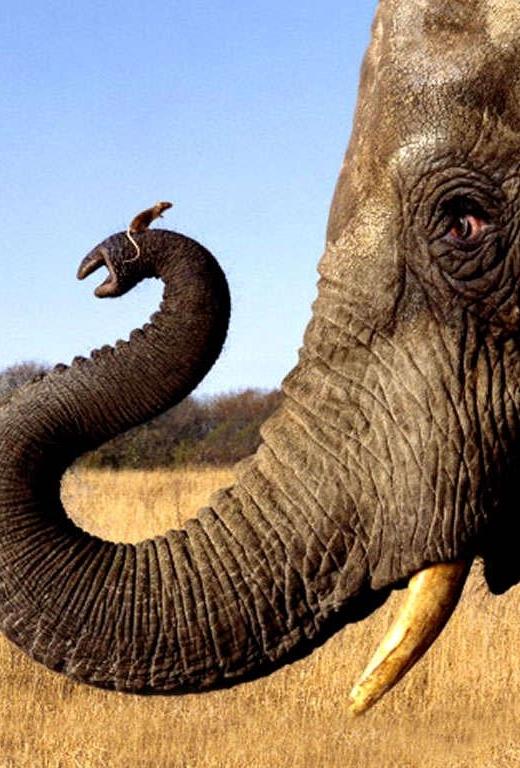 De muis denkt dat hij een olifant is