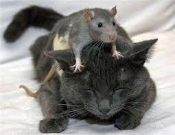 Je kan altijd nog een muis gebruiken, en wachten op de piep