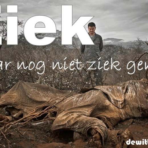 Ziek, maar nog niet ziek genoeg. Een man kijkt neer op een door stropers gedode olifant