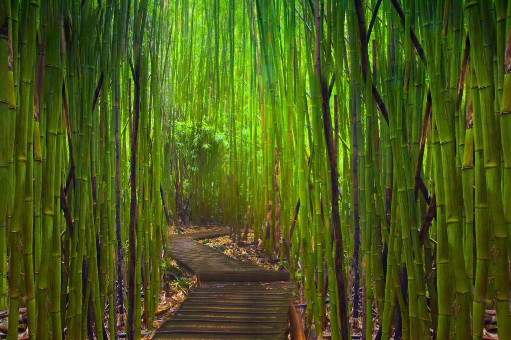 Een weggetje door een dicht begroeid bamboe-bos-. Ook bamboe is gras.