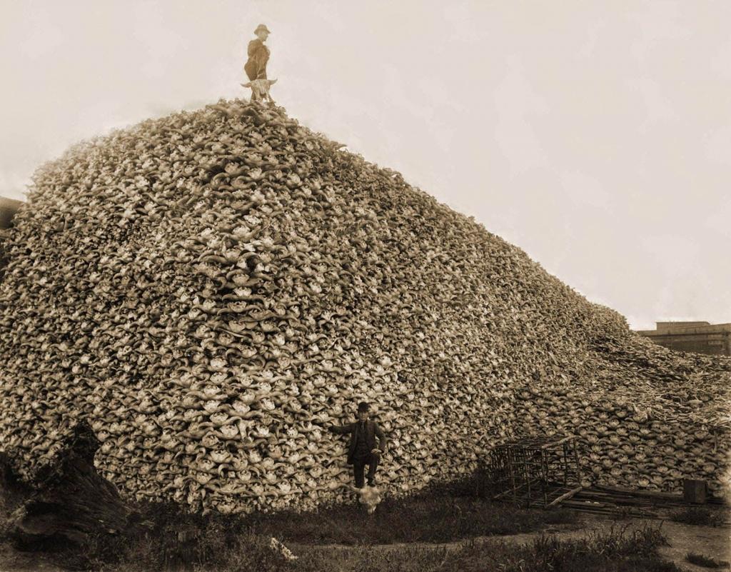 Trotse Amerikaan voor een enorme berg bizon-schedels die gebruikt voor mest (foto uit 1870)