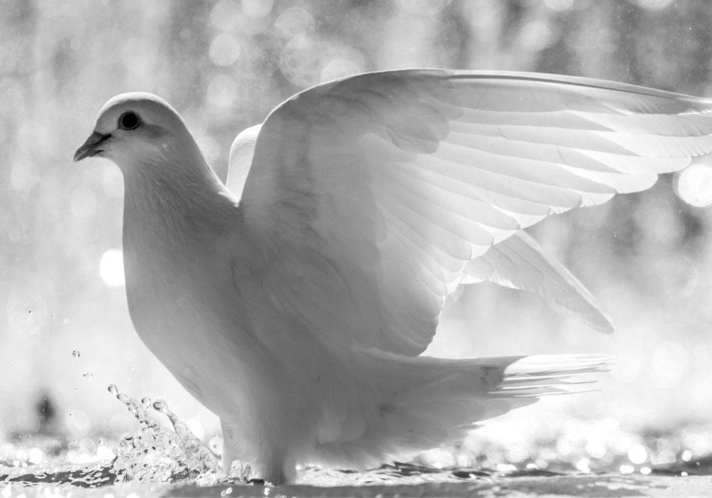 Stoppen met vechten op weg naar vrede, een vredesduif
