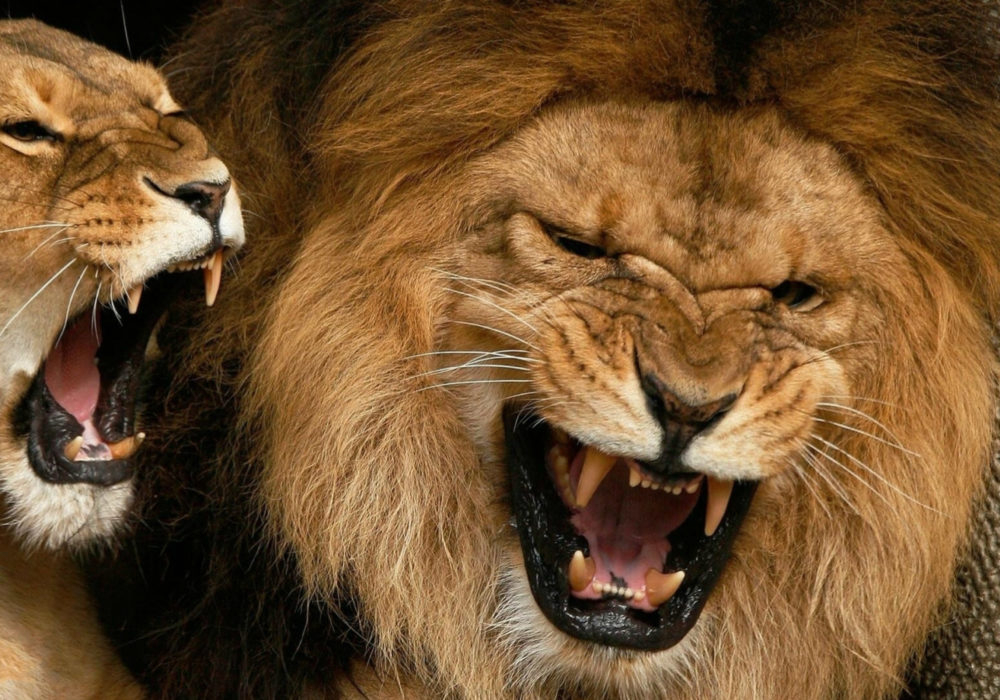 Volwassen reactie op intimidatie, geweld en agressie
